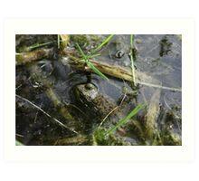 Frog v.1 Art Print