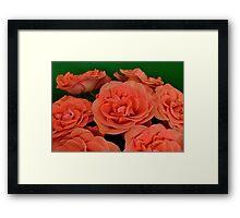 Orange Roses  Framed Print
