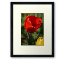Red Tulip with Friend Framed Print