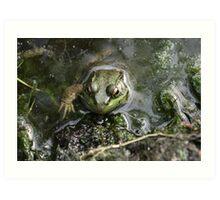 Frog v.3 Art Print