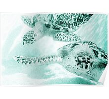 Turtle Reef Poster