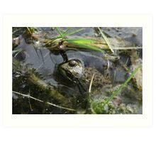 Frog v.4 Art Print
