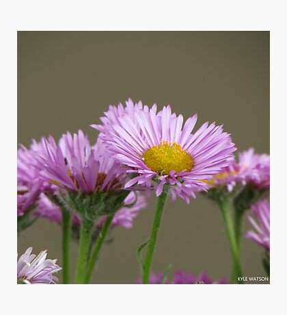 The Pretty Little Flower  Photographic Print