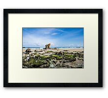 Rocks at the beach Framed Print
