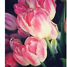 Dramatic Pink Tulips by OneDayOneImage Photography