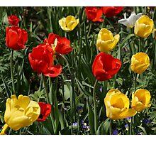 Tulip Party Photographic Print