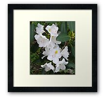 Rhododendron Flowers Framed Print