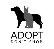 Adopt Don't Shop  Photographic Print