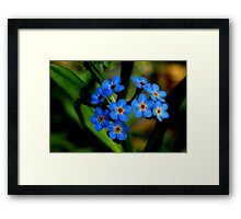 Forget-Me-Nots, Manfield Scar,River Tees, England Framed Print