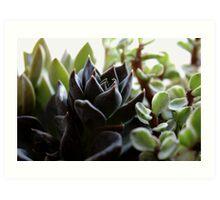 Succulents v.2 Art Print
