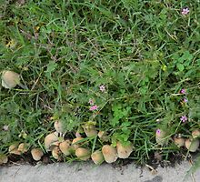"Sidewalk Mushroom ""Village"" by Navigator"