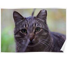 Cat in San Jose Poster