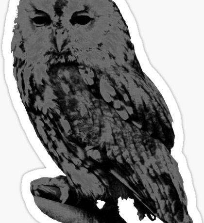 Night Owl Sticker