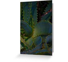 Aloe in Paradise Greeting Card