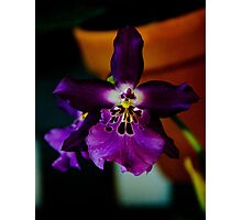 Potted Purple Orchid  Photographic Print