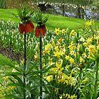 Crown Imperials - Keukenhof Gardens by BlueMidnight