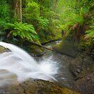 Liffey Falls Wonderland by Paul Fleming