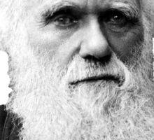 Darwin & Finch Sticker