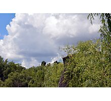 Park scenery with trees tops and cloudy sky with soap bubbles. Photographic Print