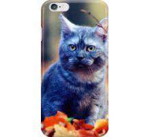 Cute Cat Sitting in Autumn Leaves iPhone Case/Skin