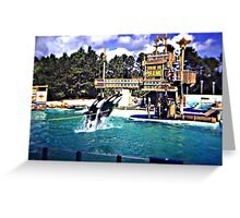 Vintage Kodachrome Slide 1970'S Shamu Orca  Greeting Card