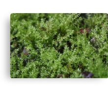 Moss on a small scale Canvas Print