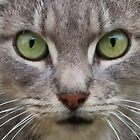 Cats Eyes by AnnDixon