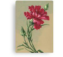Carnation - acrylic on canvas Canvas Print