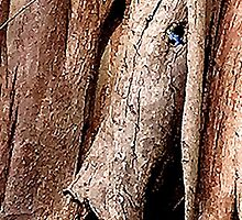 Mad tree trunk monster. #2 by ronsphotos
