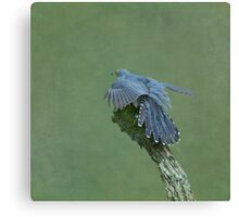 Cuckoo Canvas Print