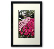 Tulips Keukenhof Framed Print