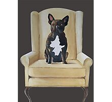 Jimmy French bulldog with attitude Photographic Print