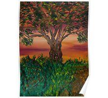Bottle Brush Tree at sunset Poster