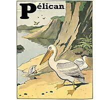 P is for Pelican - French Alphabet Animals Photographic Print
