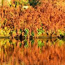 Reflections of the Fall by Stephen Frost