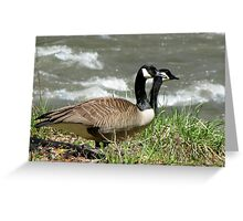 Rare Two-Headed Canada Goose Greeting Card