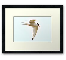 I spread my wings and fly away Framed Print