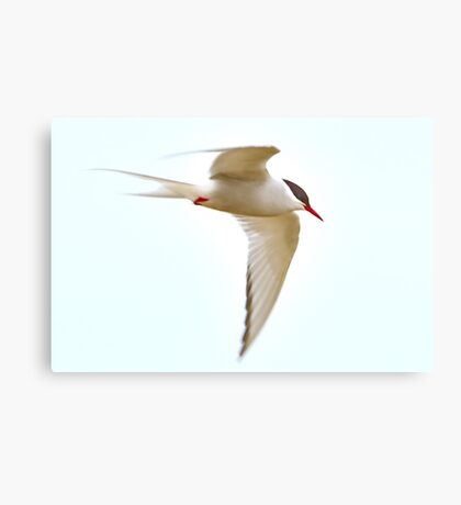 I spread my wings and fly away Canvas Print