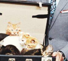 Saul Goodman's Cat Box Sticker