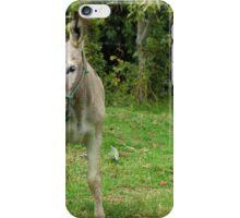 Jerusalem Donkey iPhone Case/Skin