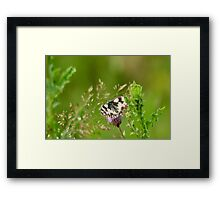 small world: let's share Framed Print