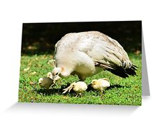 Looking for Australia (White Peafowl) Greeting Card