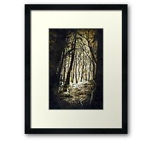 Forest Fireflies Framed Print