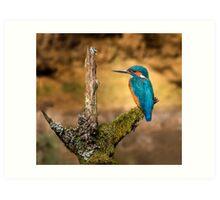 Kingfisher on branch Art Print