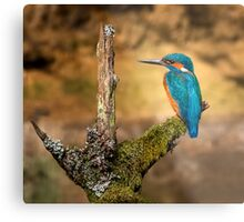 Kingfisher on branch Metal Print