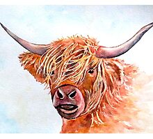 Highland Cow 2 Photographic Print