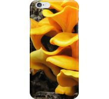 Who's Been Eating The Orange Delights?! iPhone Case/Skin