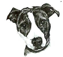 Staffie Photographic Print
