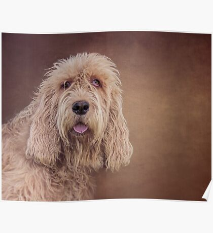 Shaggy Dog Poster