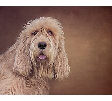 Shaggy Dog Photographic Print
